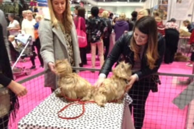 Discover Dogs London 2016