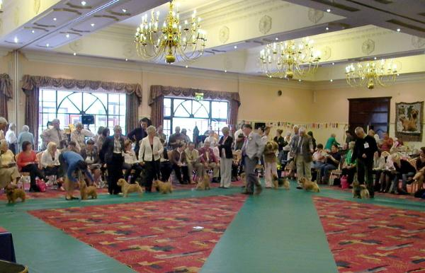 The Open Dog class in the beautiful setting of the hotel -  we had to borrow the green mats after ours were stolen - along with the ring picket fencing, mops and buckets, flower pots and prizes.
