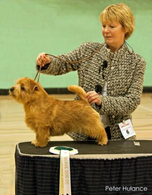 RESERVE DOG CC: KINSRIDGE TOP GUN with Diane Jenkins