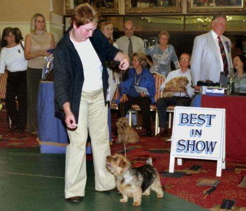 Vichea Pick and Mix with her owner Jackie Phillips wins Best in Show and Bitch CC.