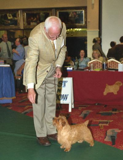 Am Ch Cause for Celebration handled by Peter Green takes Reserve Best in Show and Dog CC.