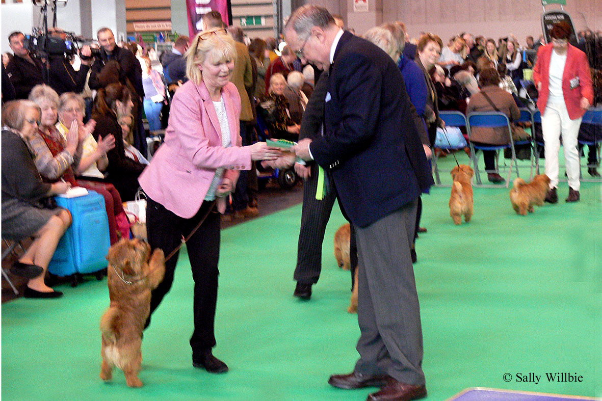 Diane receives the DCC from Ronnie Irving, with the approval of Ch Kinsridge Back Chat.