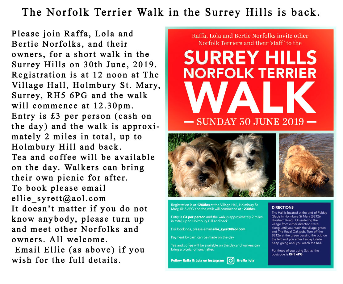 Norfolk Terrier Walk 2019