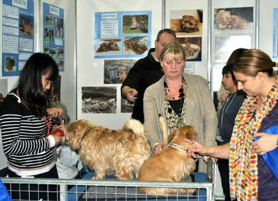 Discover Dogs 2012 London