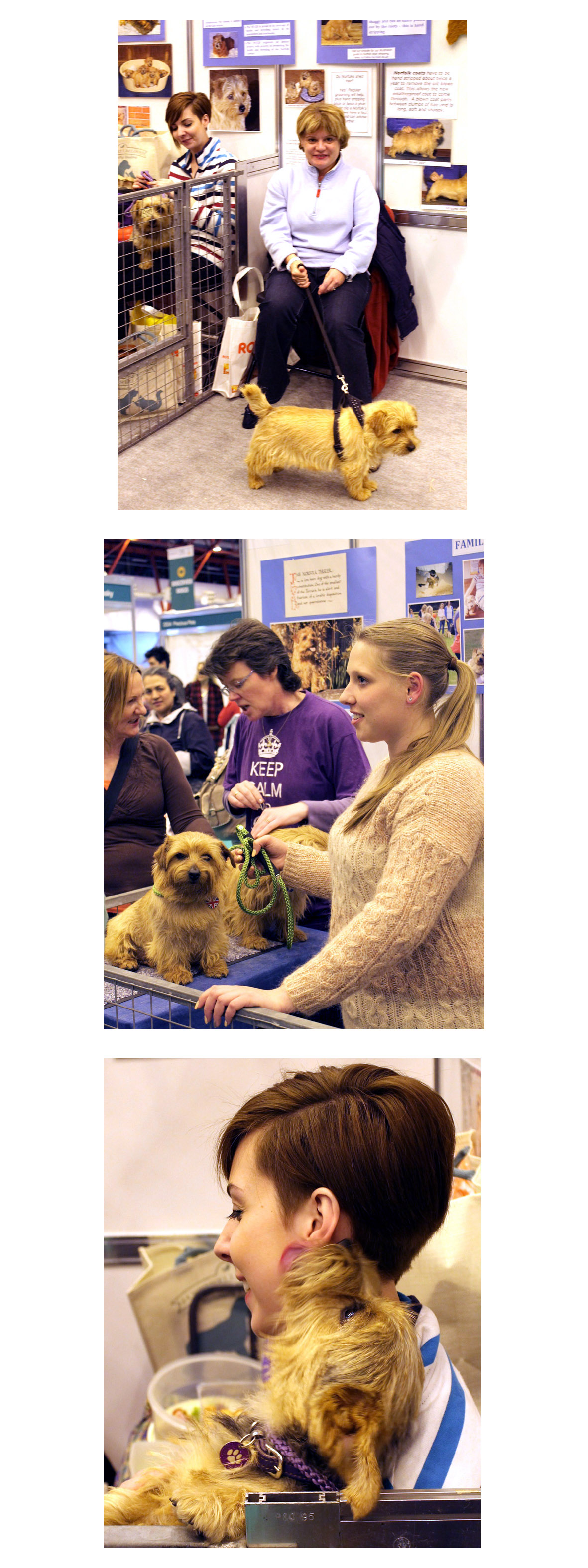 Discover Dogs London Pet Show 2013