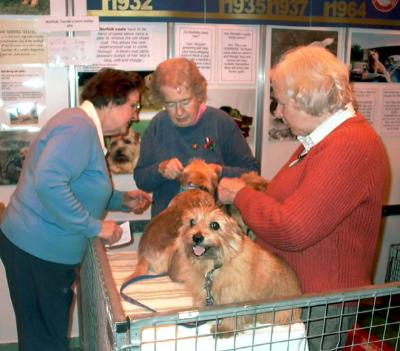Discover Dogs 2007