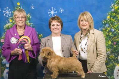 BOS PUPPY IN SHOW: GOLDEN BREEZE