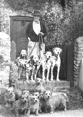Norfolk Terrier History - Miss Macfie with her drop-ear Norwich and her Dalmatians.