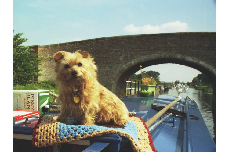 Frances, a rescue dog, on her narrowboat near Nottingham.
