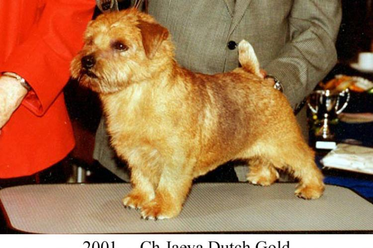 2001 Ch Jaeva Dutch Gold