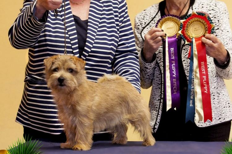 Best Puppy in Show - Brickin All For The Best