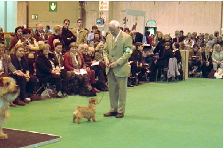 Keen interest from the ringside in the Open Bitch class.  On the table in the foreground is Coco's litter sister Ch Cracknor Cause a Stir at Richell