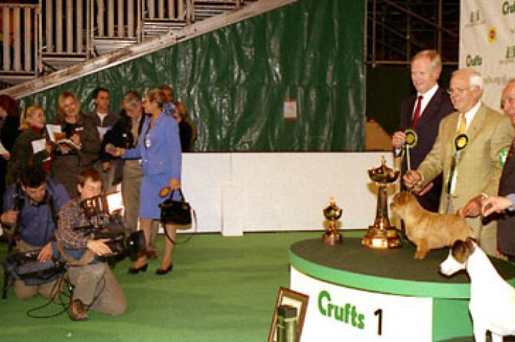 Peter and Coco are filmed for TV after the Terrier Group while Beth and Elisabeth brief reporters.