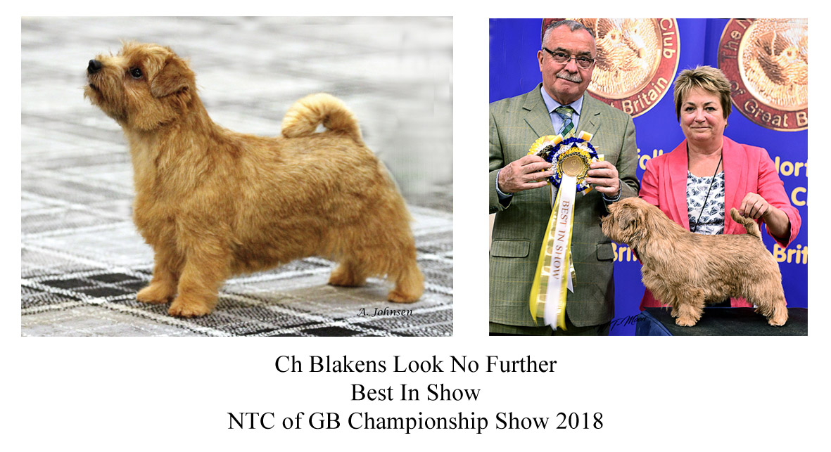 Ch Blakens Look No Further Best In Show NTC of GB Championship Show 2018