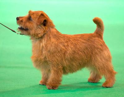 Crufts 2012 Best Puppy